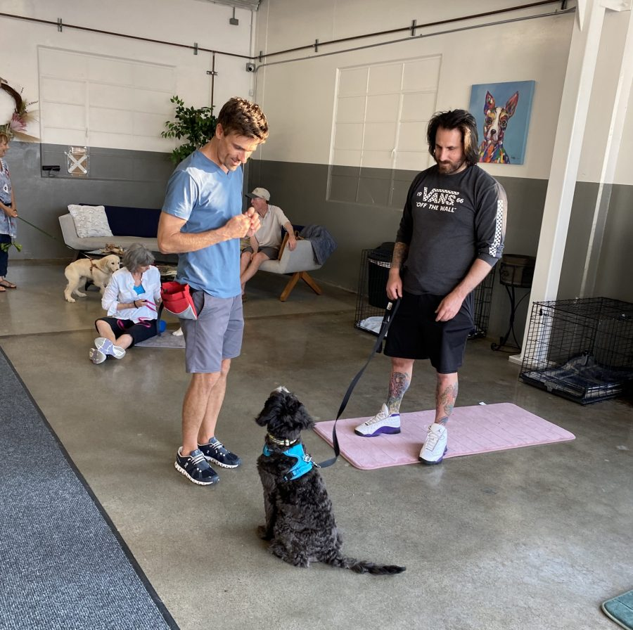 Group Puppy Training Class